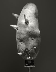 Black and White portrait of potato on old fork.
